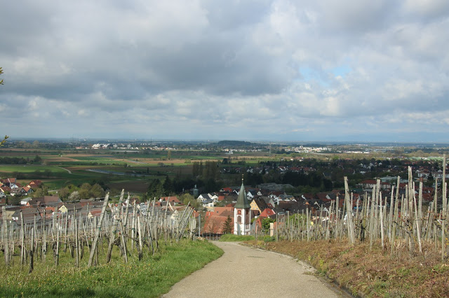 Veduta panoramica su Markgräflerland da Olbergkapelle