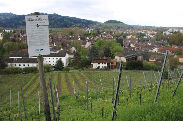 Vigneti sulla collina di Staufen